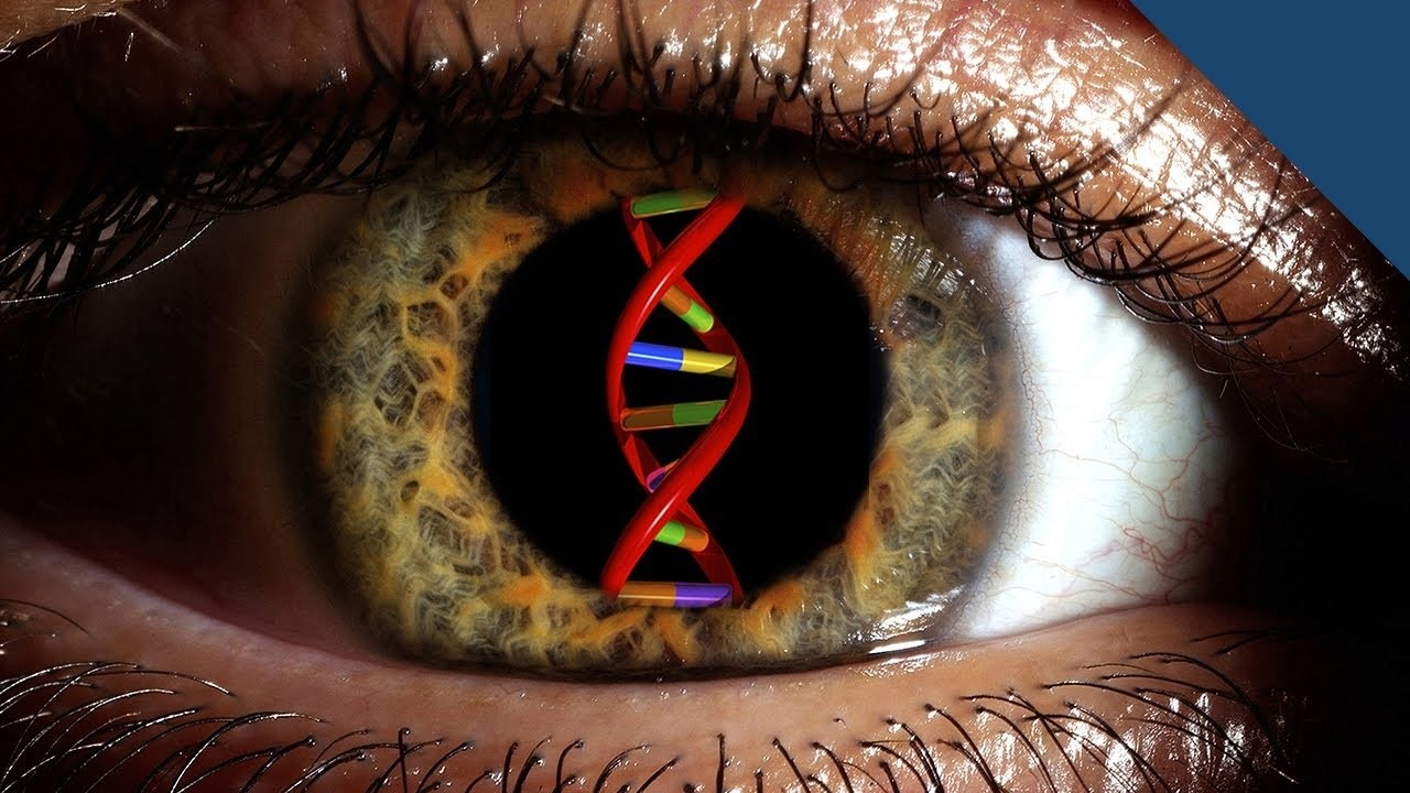 Генная терапия для заболеваний сетчатки. Статус текущих исследований