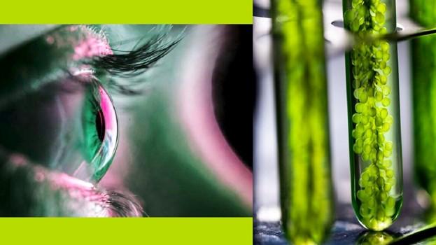 Генная терапия с использованием водорослей частично восстановила зрение полностью слепого человека