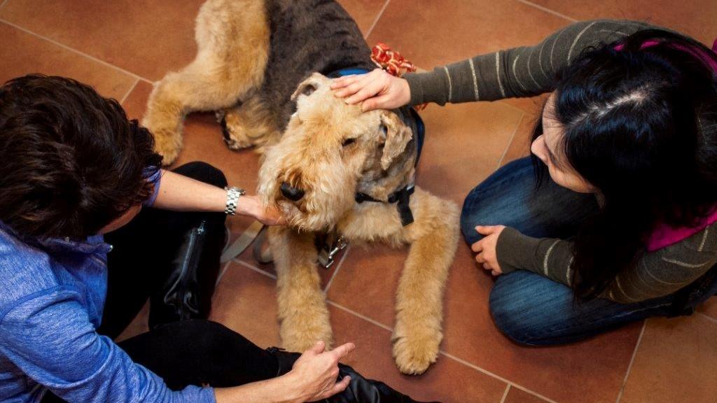 Генная терапия, проверенная на собаках, может помочь людям
